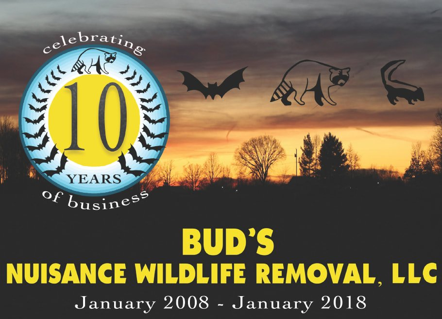 Buds Wildlife - 10 Year Banner